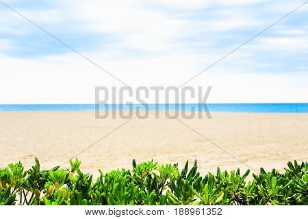 Tropical beach, blue sea and sand in summer day. Leaves green plants on foreground, blurred seascape, sandy coastline. Vacation background.