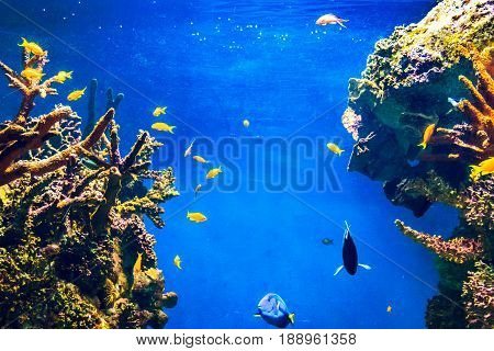 Tropical fish and coral reef in ocean.  Underwater life background, Red Sea, Egypt.