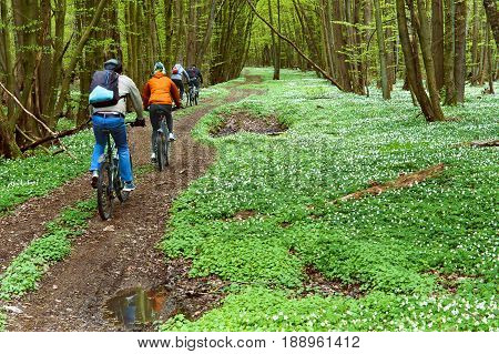 the cyclist, forest, walk, ride, spring, group, riding