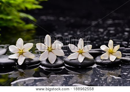 Still life with four gardenia and green, plant with therapy stones