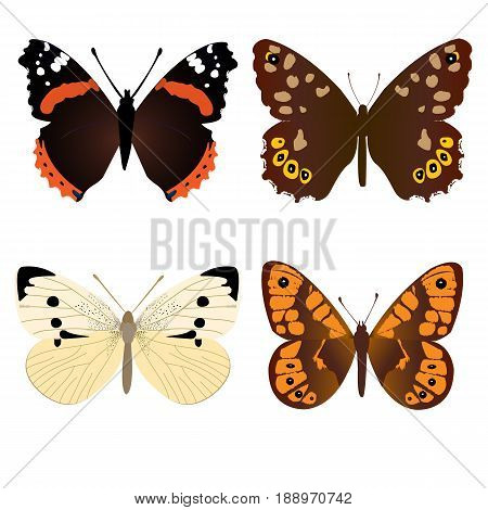 Collection of four common butterflies; Amiral butterfly; White butterfly; Speckled Wood butterfly; Wall brown butterfly