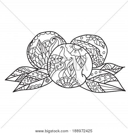 Coloring pages for adults.Hand drawn sketch style peach fruit. Ripe whole peach and peach quarter. fresh farm fruits vector illustration.