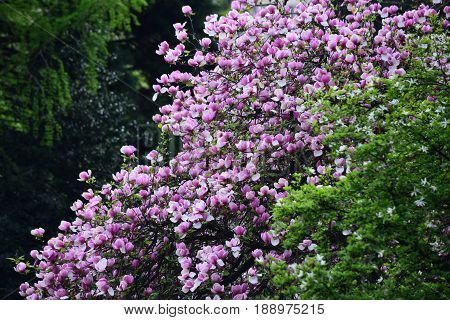 Floral Design And Gardening, Spring And Summer, Nature And Environment