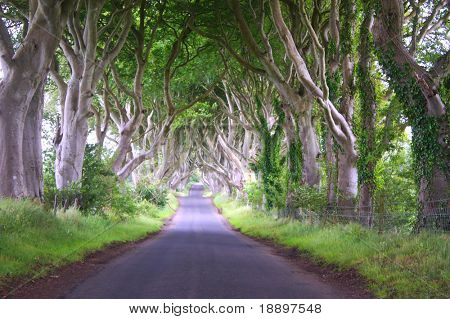 Long road with arched trees