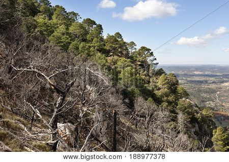 Effects of a forest fire in Los Ports Mountains