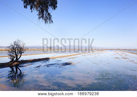Delta of Ebro. Rice fieds in Spain