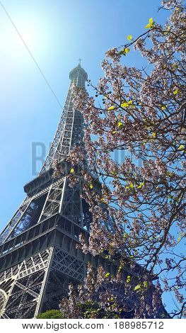 Eiffel Tower on blue sky sunny background with beautiful blooming trees. Spring in Paris France.