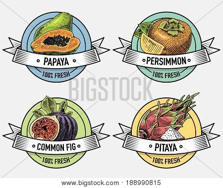 Vintage set of labels, emblems or logo for vegeterian food, fruits hand drawn or engraved. Retro farm american style.
