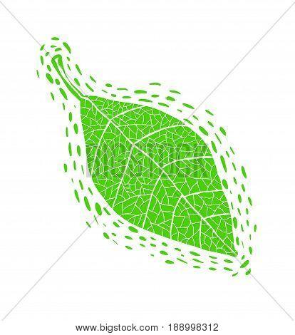 Hand drawn green leaf illustration. Vector design.
