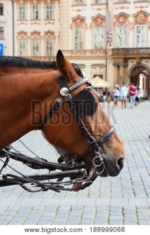 Head of a horse hitching up in Prague