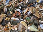 Shells on the beach as wave comes in poster