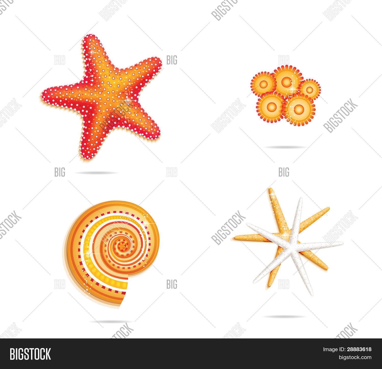 Tropical Sea Stars Vector Photo Free Trial Bigstock