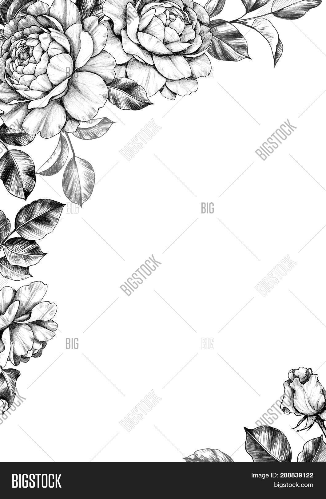 Black white elegant image photo free trial bigstock