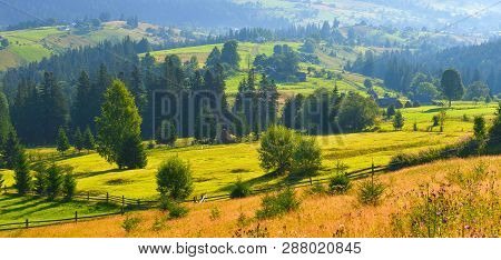 Summer Countryside. View Of Highland With Conifer Forest