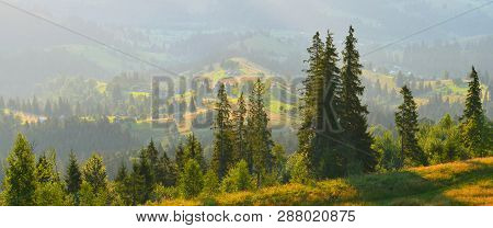 Morning In Summer Countryside. Panorama Of Summer Mountains With Conifer Forest