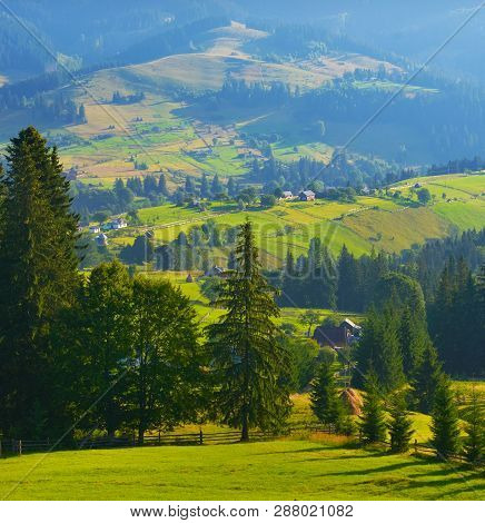 Summer Countryside. View Of Conifer Forest In Summer