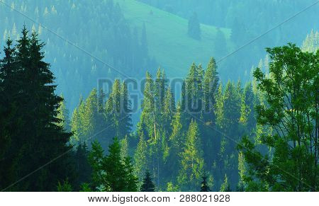Forest. Landscape With Evergreen Conifer Forest In Highland