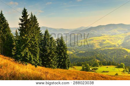 Autumn Forest. Evergreen Conifer Forest In Autumn Mountains