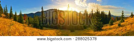 Forest Panorama. A Vast Panorama Of Conifer Forest In Highland