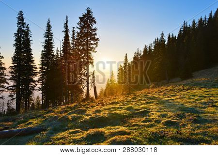View Of Mountain Forest With Rising Sun.landscape With Conifer Evergreen Forest In Spring Highland.
