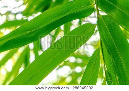 Nature Cleary Green Leaf Hilight For Any Background.
