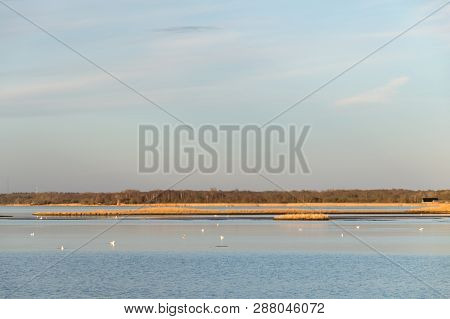 Beautiful Calm Bay With White Birds And Reeds By The Coast Of The Swedish Island Oland In The Baltic