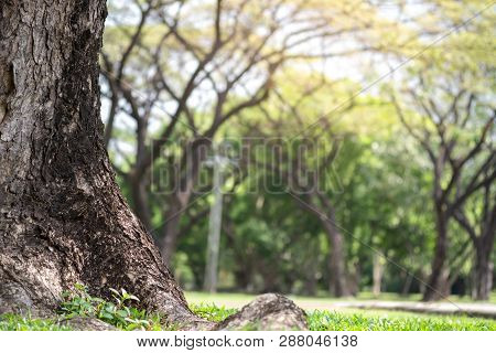 Closeup Of Big Trunk And Natural Blurred Green Trees In Public Park.environment Concept.-image.