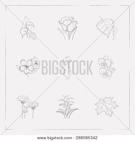 Set Of Flora Icons Line Style Symbols With Guzmania, Dianthus, Arum Lily And Other Icons For Your We