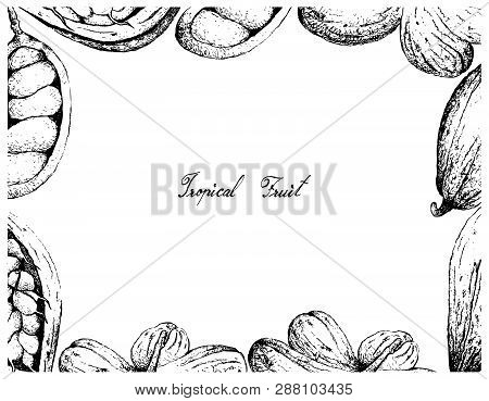 Tropical Fruit, Illustration Frame Of Hand Drawn Sketch Theobroma Cacao Or Cocoa And Cola Millenii F