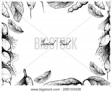 Tropical Fruit, Illustration Frame Of Hand Drawn Sketch Dasymaschalon Lomentaceum And Barringtonia E