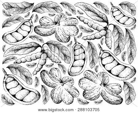 Tropical Fruit, Illustration  Background Of Hand Drawn Sketch Of Cola Millenii And Dasymaschalon Lom