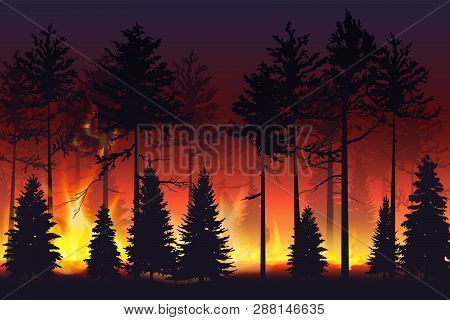 Wild Fire In The Night Forest. Natural Disaster. Wildfire. Black Silhouette Trees On Fire Realistic