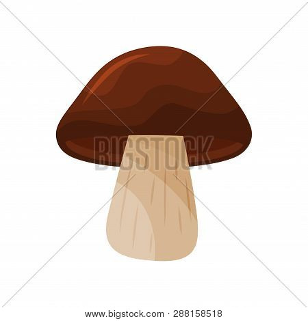 Greaser Mushroom With Big Brown Cap And Beige Stalk. Type Of Edible Fungus. Cooking Ingredient. Flat
