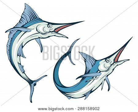 Blue Marlin Fish In Different Poses , Vector Graphic To Design