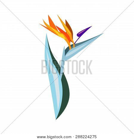 Exotic Flower Illustration. Nature, Flora, Summer. Nature Plants Concept. Vector Illustration Can Be