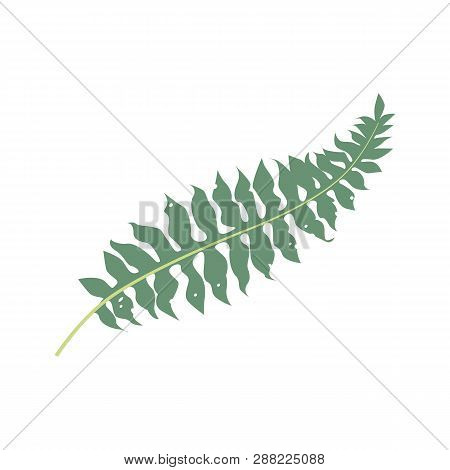 Tropical Fern Illustration. Nature, Flora, Summer. Nature Plants Concept. Vector Illustration Can Be
