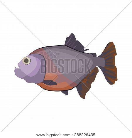 South American piranha. Freshwater predatory fish. Can be used for topics like carnivore, aquarium, fauna poster