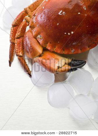 crab and  ice over steel background