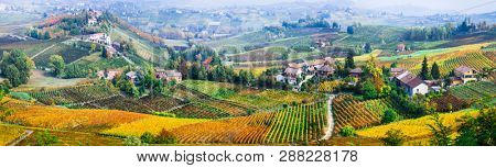 scenic nature. Golden vineyards of Piemonte. famous vine region of Italy