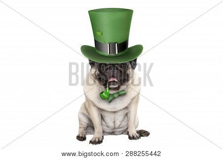 Cute Smiling St Patricks Day Pug Puppy Dog Sitting Down With Green Top Hat And Pipe, Isolated On Whi