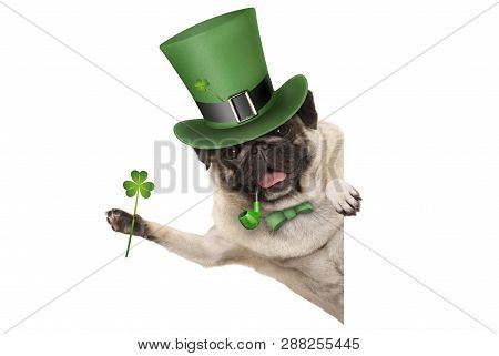 St Patricks Day Pug Puppy Dog With Green Leprechaun Hat And Pipe, Holding Up Shamrock Clover, Smilin