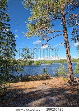 Idyllic Finnish Summer Lake Scene At Teijo Hiking Trail In Salo, Finland. Big Tree And The Matildaja
