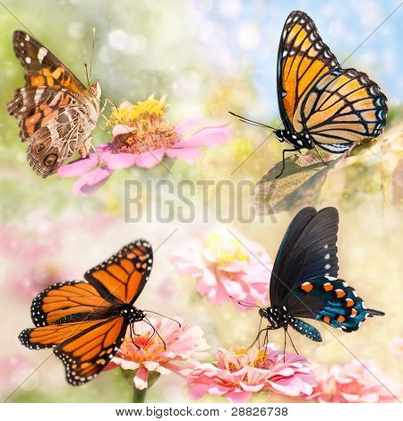 Dreamy collage of four beautiful butterflies - Monarch, Viceroy, Green Swallowtail and American painted Lady