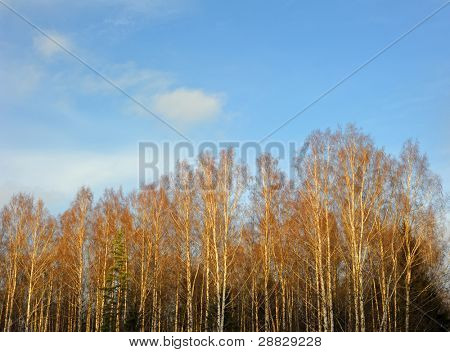 Trees and the sky in autumn