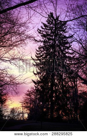 Majestic Conifer  Sentinel Welcoming Dusk To The Fairy Forest