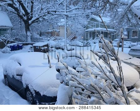 The Trees Covered With Snow, At Home, Cars, Paths In The City. Die Mit Dem Schnee Abgedeckten Bäume,
