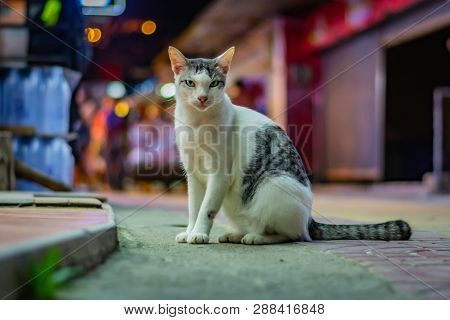 White Cat With Grey Spots Sits On The Street Late In The Evening, The City Lights In The Background,