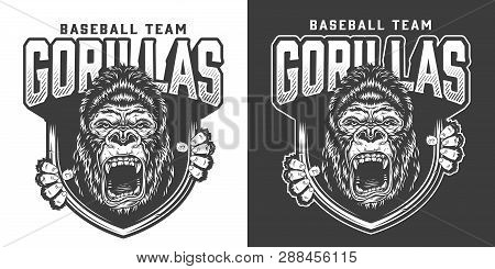 Baseball Team Angry Gorilla Mascot Emblem With Ferocious Primate Head And Claws In Vintage Monochrom