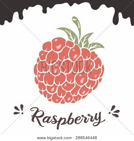 Raspberry Vector Illustration, Berry Clipart. Raspberry Vintage Vector Illustration For Logo, Design