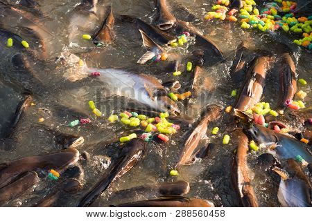 children feeding food for fish in Buddhist Sabbath at temple. in this day, the most buddhist go to temple and merit such as feeding food for fish, that's buddhism culture. poster